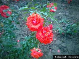 garden-2